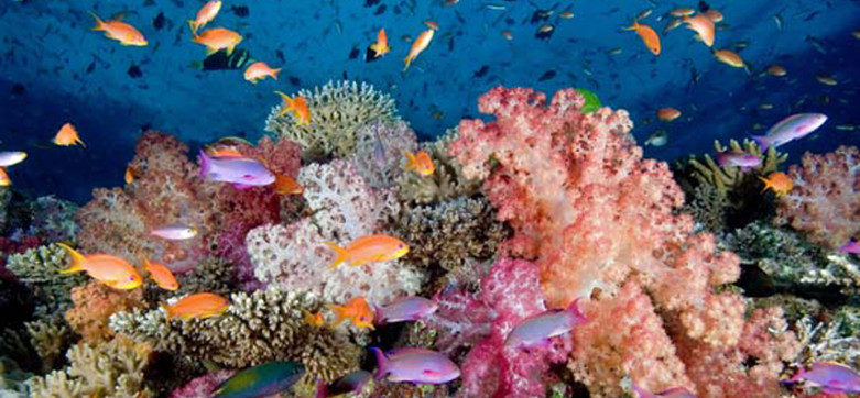 Namena Reef Divers