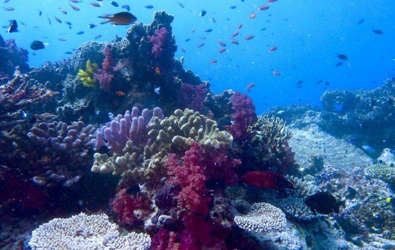 Dive Academy Fiji